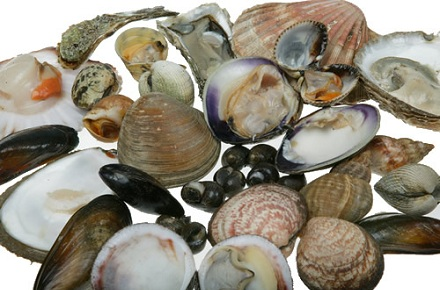 Food Safety: EFSA assesses control options for norovirus in oysters