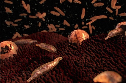 Food Safety: Spring 2012 Cryptosporidium outbreak report